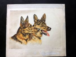 Paul Wood C1935 Signed Etching. Alsation German Shepherds Dogs